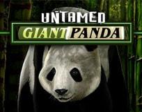 Untamed - Giant Panda